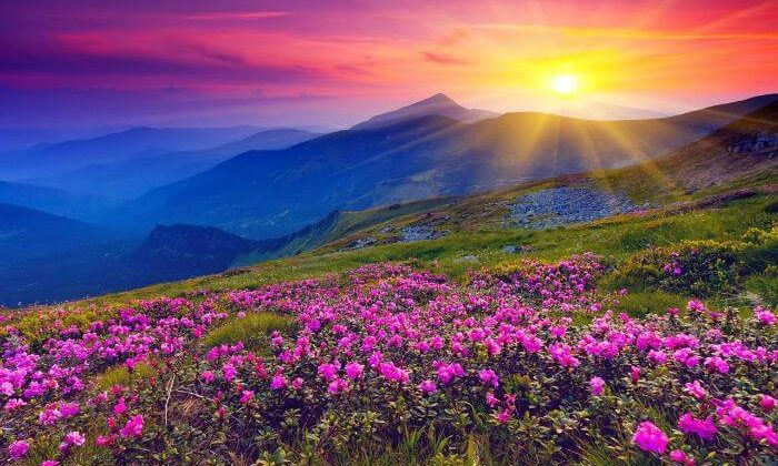 Valley-of-flowers-uttrakhand-700x420